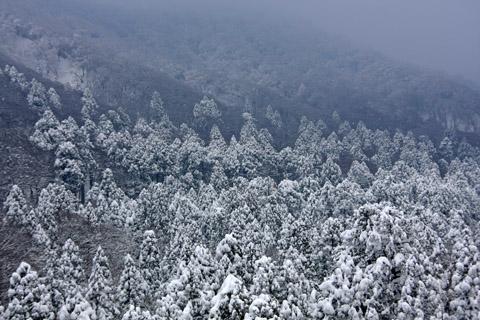 冬の大山の森