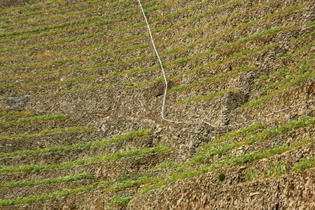 遊子水荷浦の段畑