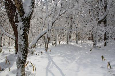 冬の皿ヶ嶺