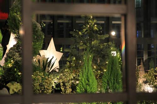 夜の奇跡の星の植物館