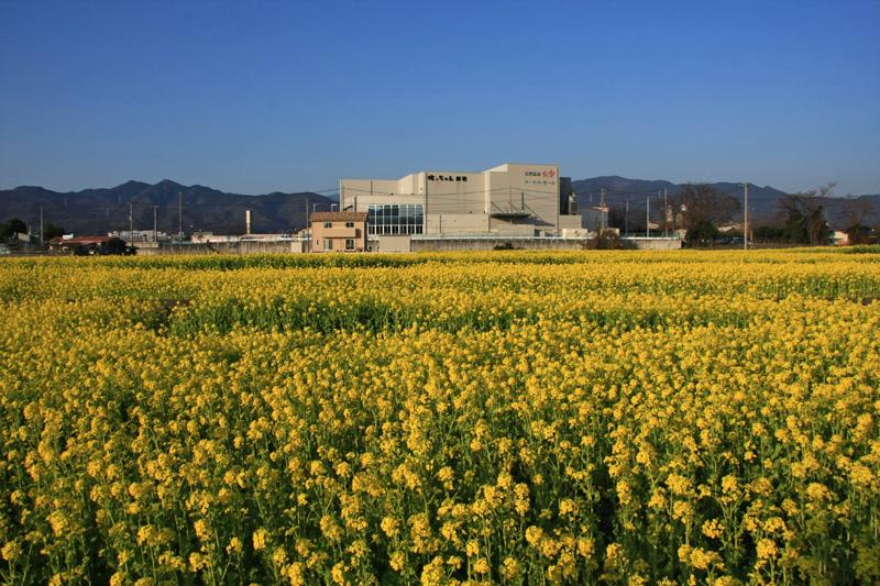 見奈良の菜の花畑とレスパスシティ