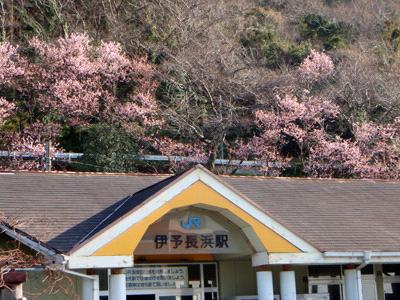 春の伊予長浜駅