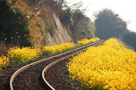 春のJR予讃線