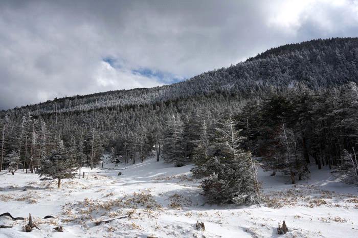 雪の北八ヶ岳