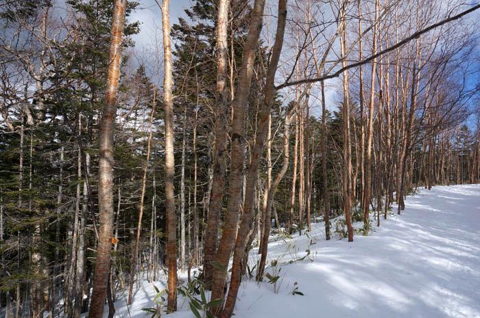 雪の大石川林道