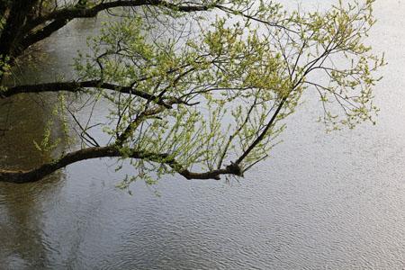 春の小田川