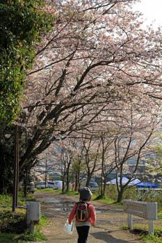 春の知清公園