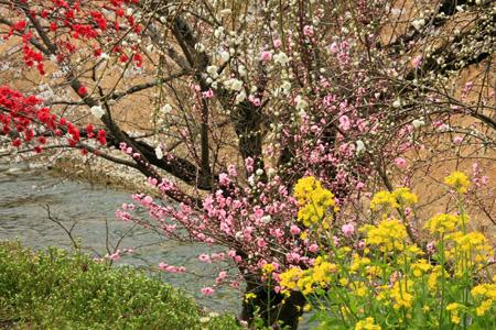 内子フレッシュパークからりの春