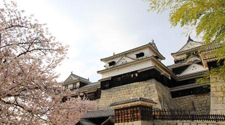 桜の松山城