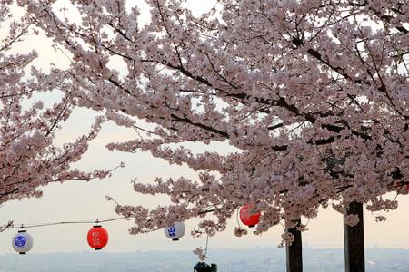 松山城花見