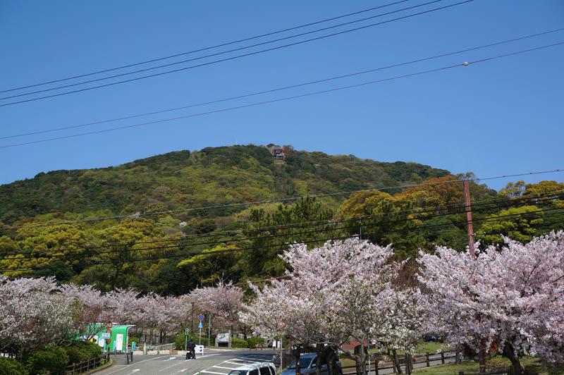 桜の須磨浦公園