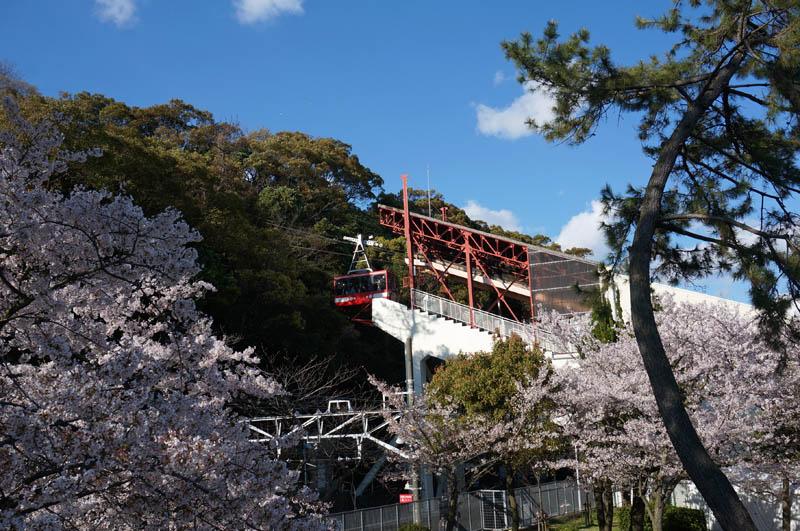 桜の須磨浦ロープウェイ