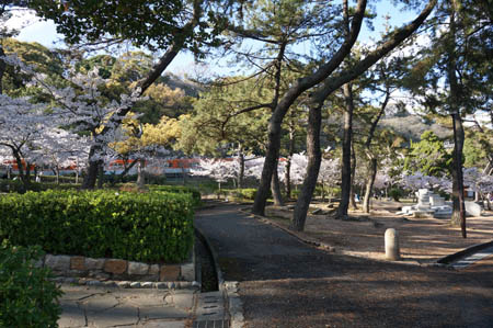 春の須磨浦公園