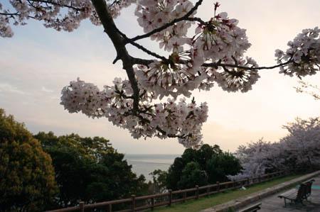 須磨浦公園花見