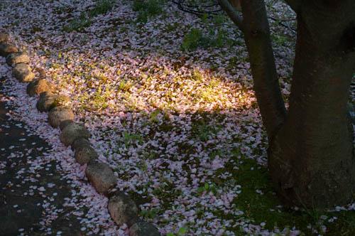 須磨浦公園夜桜