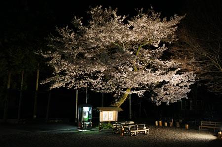 石鎚ふれあいの里夜桜
