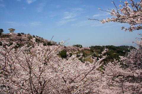 桜の谷上山