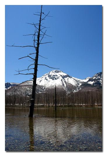 大正池の立ち枯れと焼岳