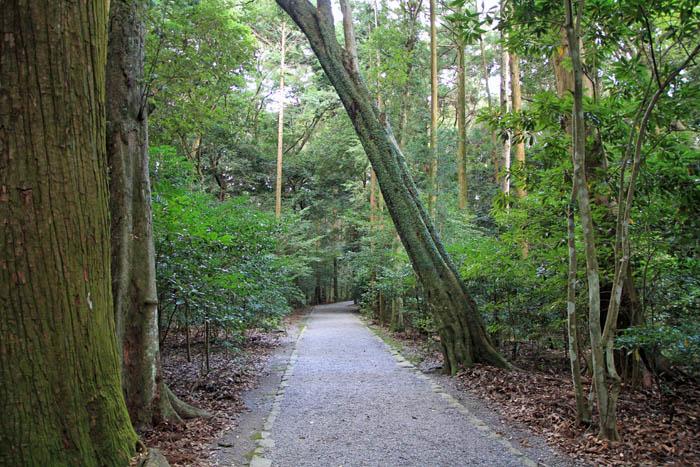 伊勢神宮外宮の森