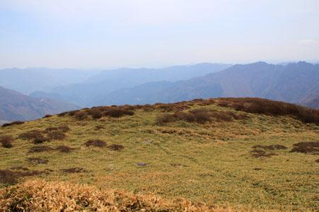 笹ヶ峰頂上直下の笹原