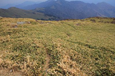 笹ヶ峰頂上からの南側への下り