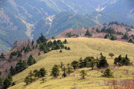 笹ヶ峰頂上の笹原