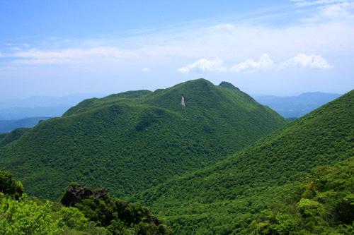黒岳の原生林