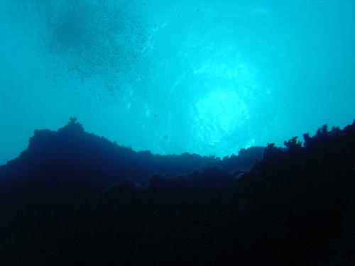 与那国島ダイビング