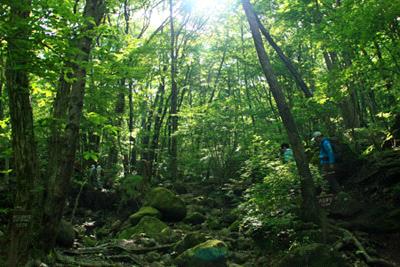 九重連山の森