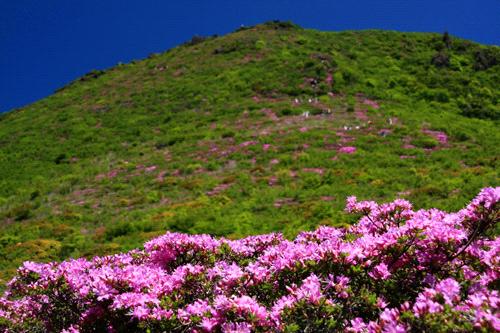 平治岳とミヤマキリシマ
