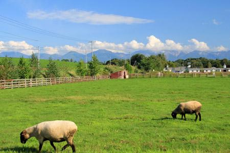 ファームレストラン千代田の牧場