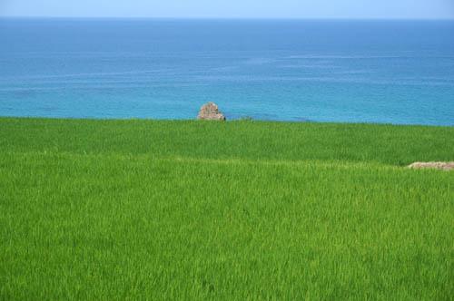 夏の海と田
