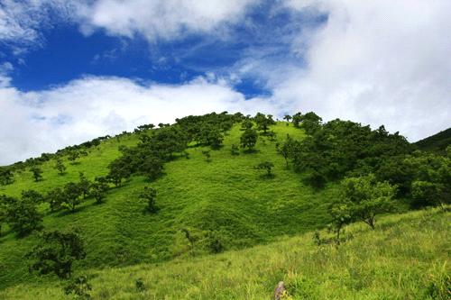 由布岳の草原