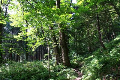 大山滝古道