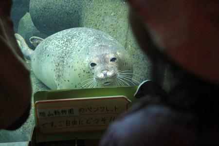 旭山動物園あざらし
