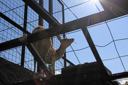 旭山動物園エゾジカの森
