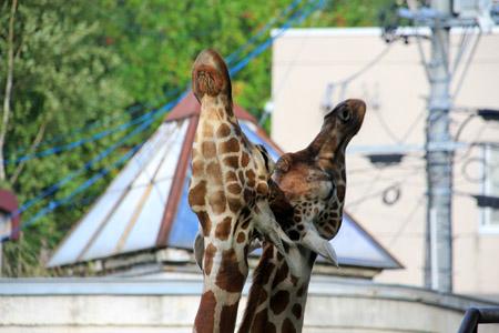 旭山動物園総合動物舎
