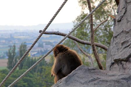 旭山動物園サル山