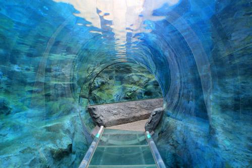 旭山動物園ぺんぎん館水中トンネル