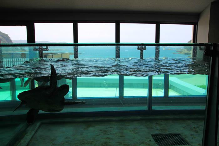 足摺海洋館ウミガメ