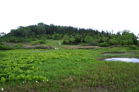 栂池自然園ワタスゲ湿原