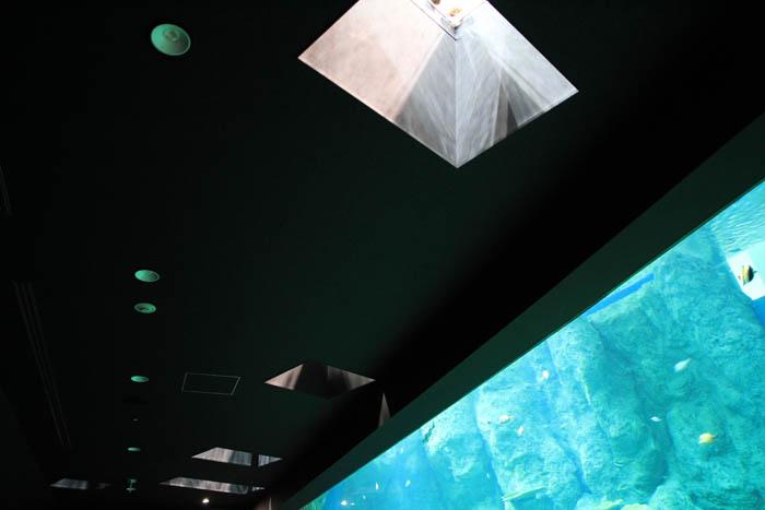 足摺海洋館竜串大水槽