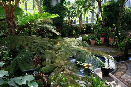 奇跡の星の植物館トロピカルガーデン