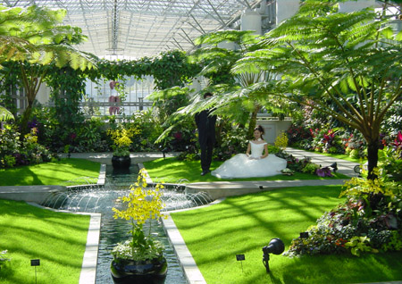 奇跡の星の植物館ウエディング