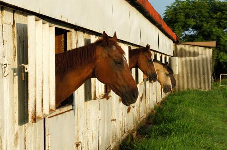 松山乗馬クラブ