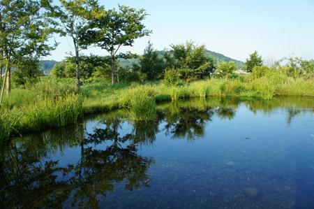重信川の泉