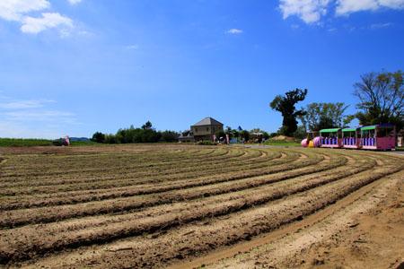 イングランドの丘花畑