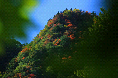 桑瀬峠付近の紅葉