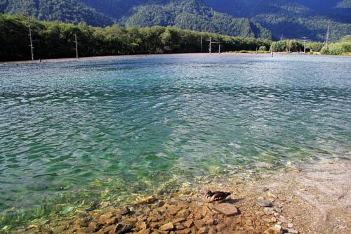 大正池の透き通った水