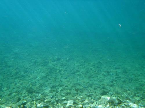 大正池水中